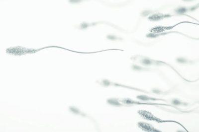 recuperación de espermatozoides